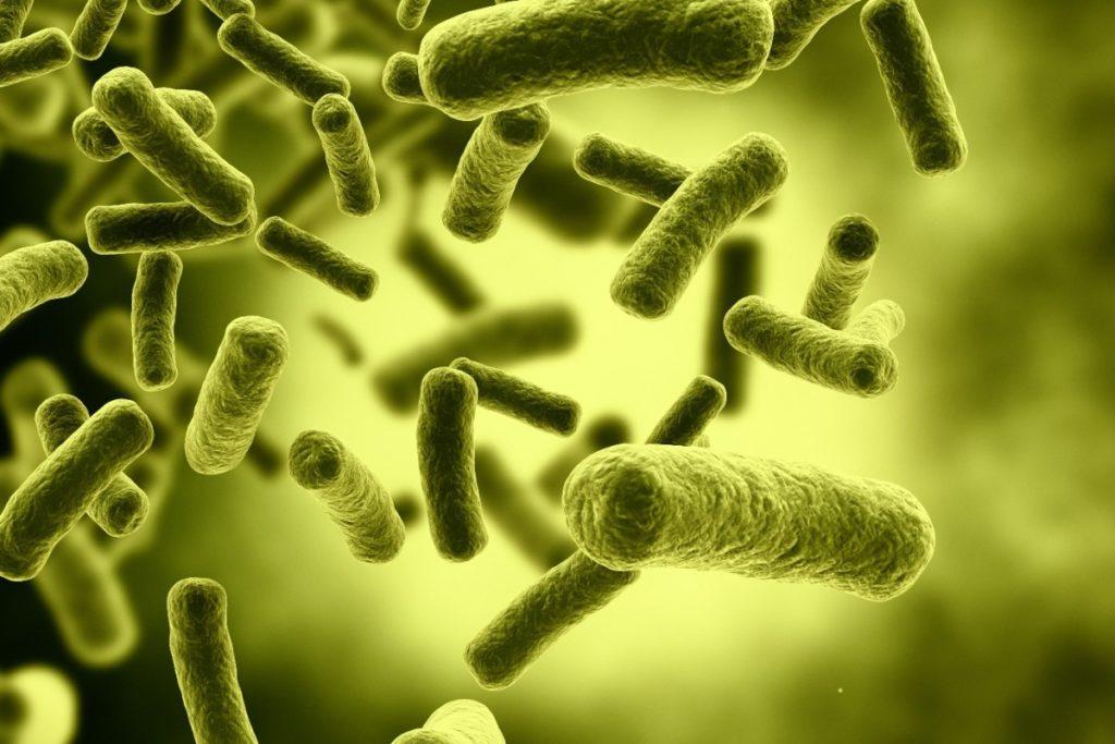 аэробные бактерии септик топас